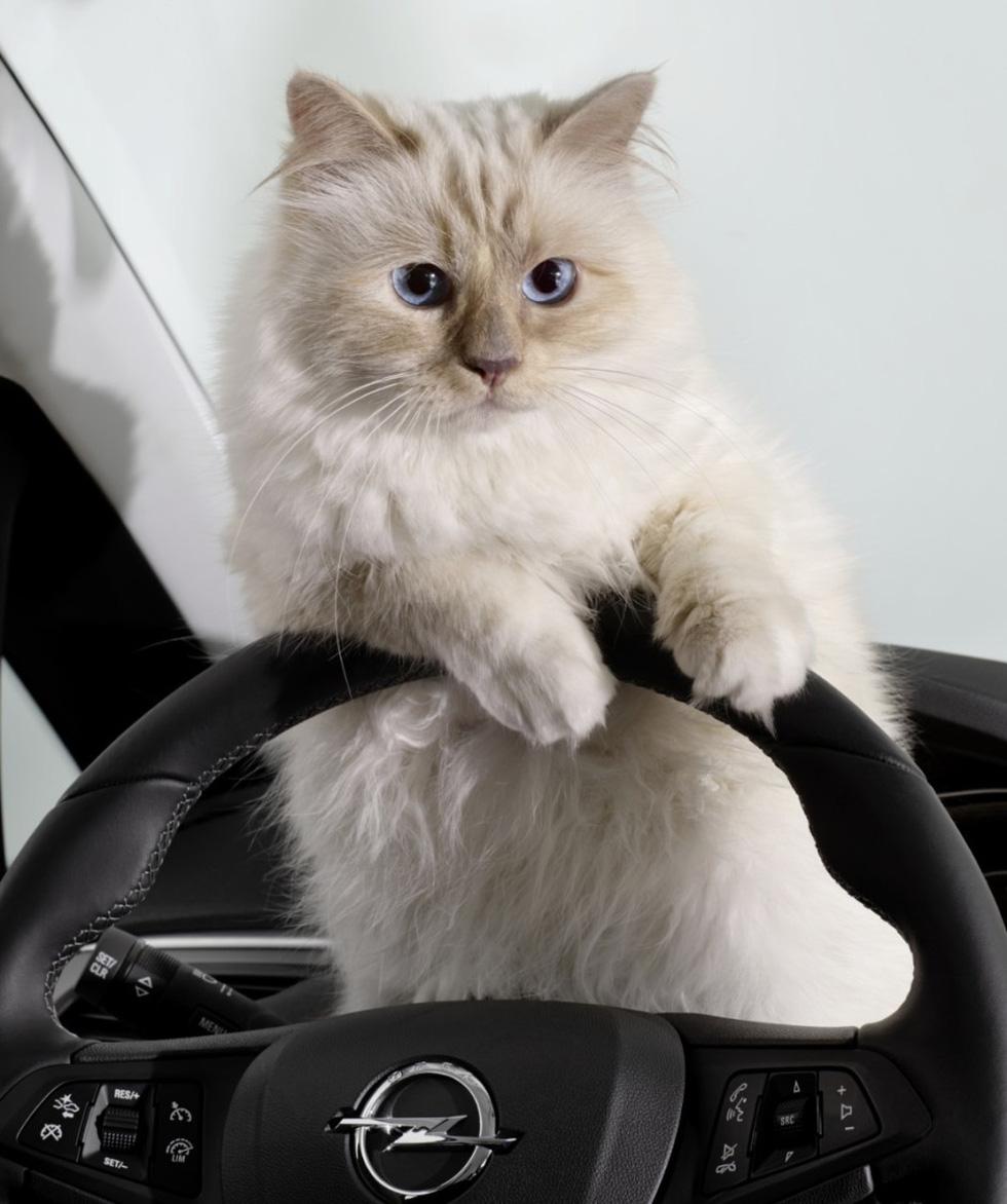 Cô mèo Choupette sẽ thừa kế 200 triệu đô của ông hoàng Chanel? - Ảnh 9.