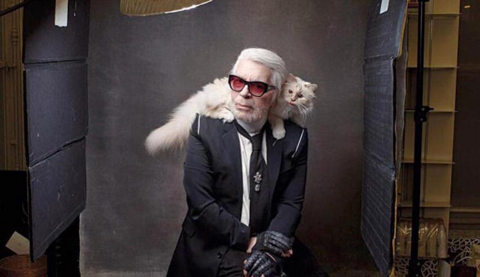 Cô mèo Choupette sẽ thừa kế 200 triệu đô của ông hoàng Chanel? - Ảnh 8.