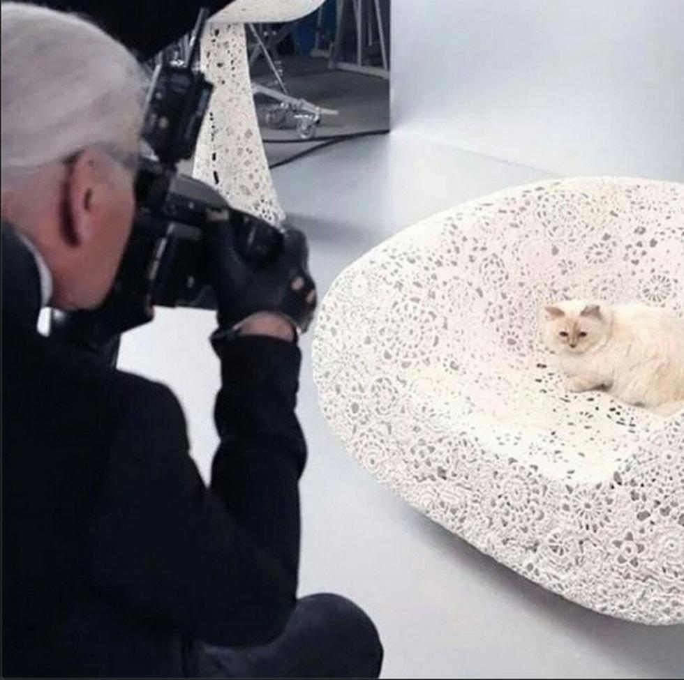 Cô mèo Choupette sẽ thừa kế 200 triệu đô của ông hoàng Chanel? - Ảnh 6.