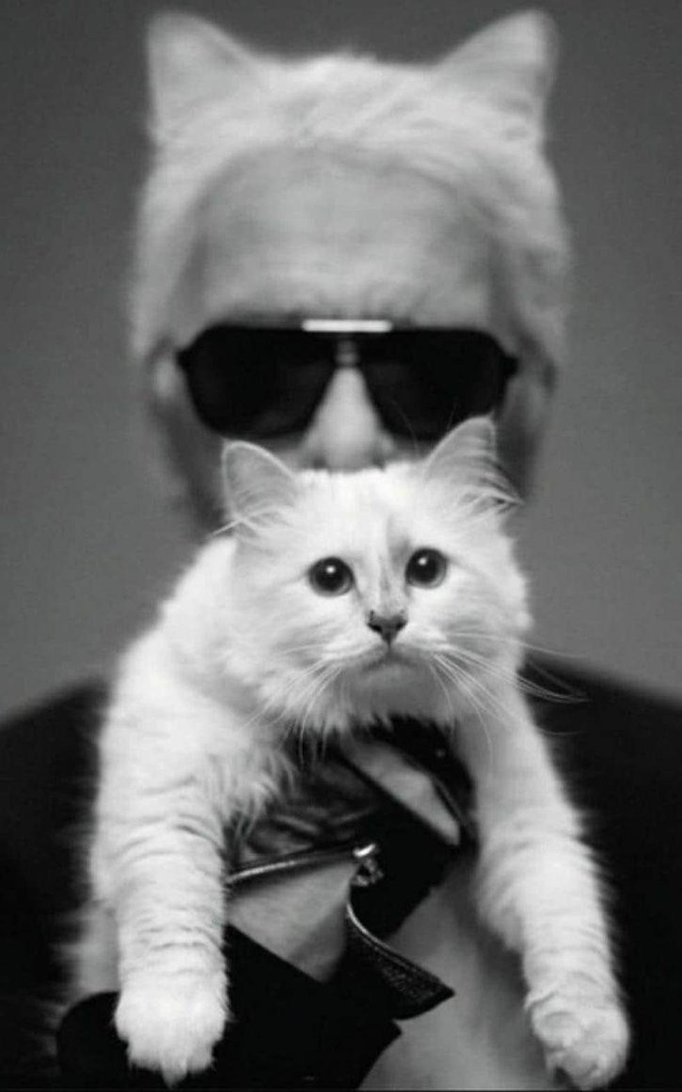 Cô mèo Choupette sẽ thừa kế 200 triệu đô của ông hoàng Chanel? - Ảnh 5.