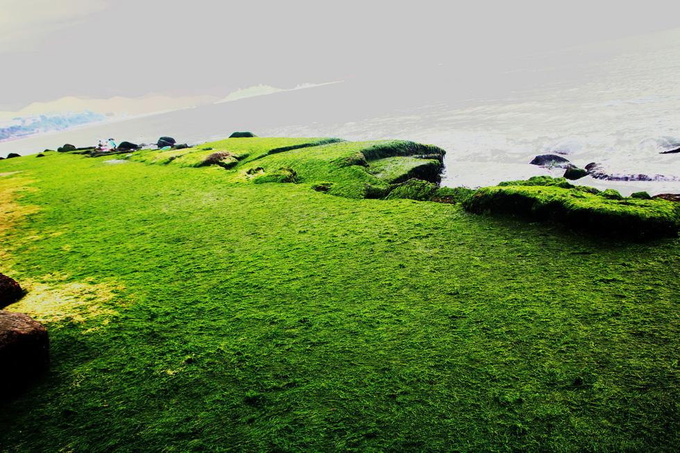 Bãi rêu tóc xanh trên con đường đẹp nhất Nha Trang - Ảnh 4.