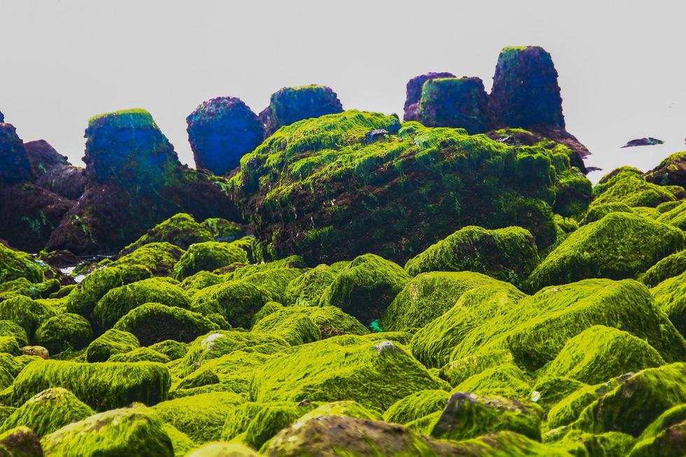 Ngắm bãi rêu 'tóc xanh' trên con đường đẹp nhất Nha Trang
