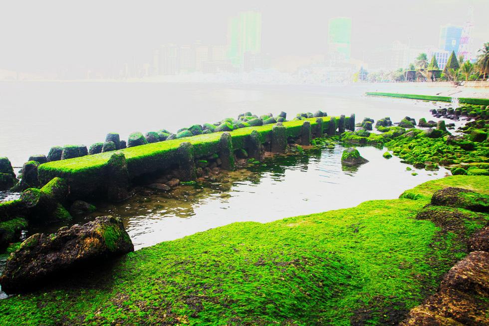 Bãi rêu tóc xanh trên con đường đẹp nhất Nha Trang - Ảnh 3.