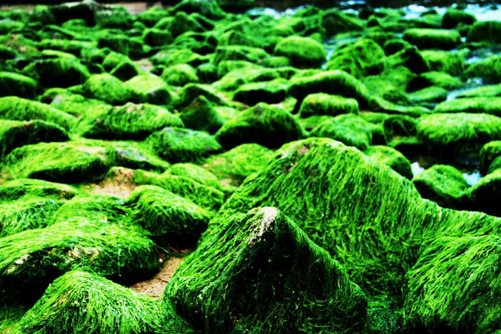 Bãi rêu tóc xanh trên con đường đẹp nhất Nha Trang - Ảnh 6.