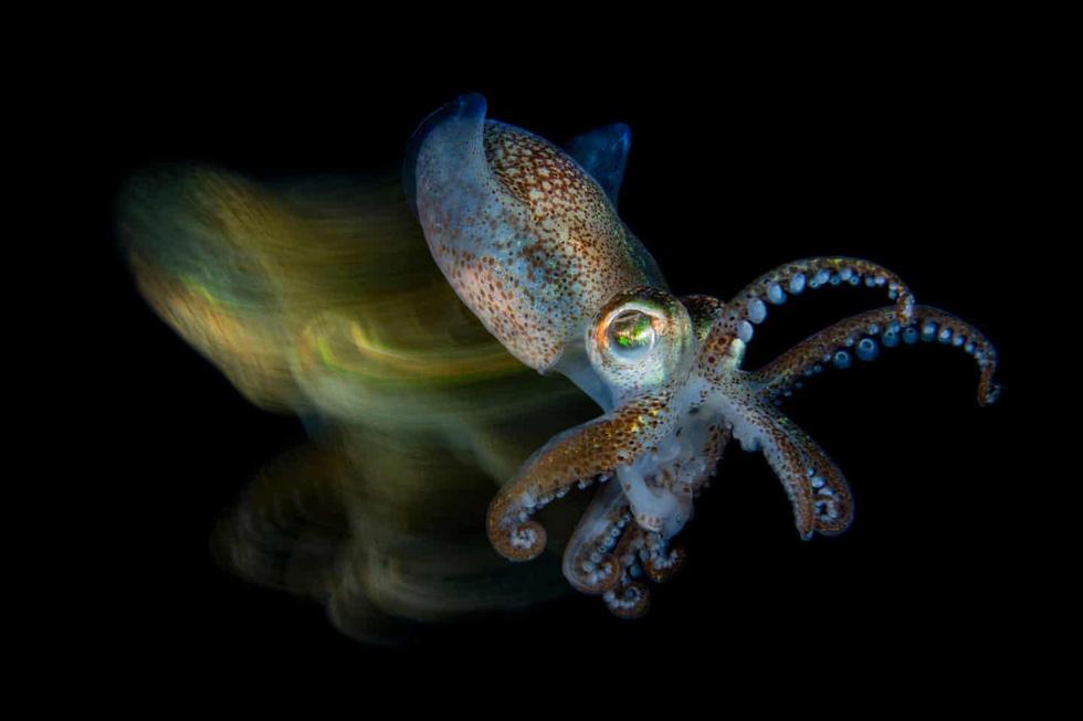 Mê mẩn ảnh đẹp đại dương năm 2019 - Ảnh 2.