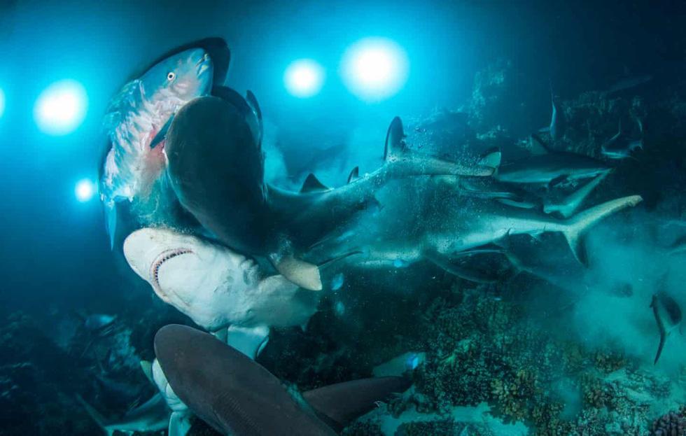 Mê mẩn ảnh đẹp đại dương năm 2019 - Ảnh 4.