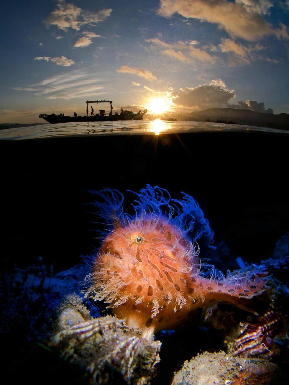 Mê mẩn ảnh đẹp đại dương năm 2019 - Ảnh 7.