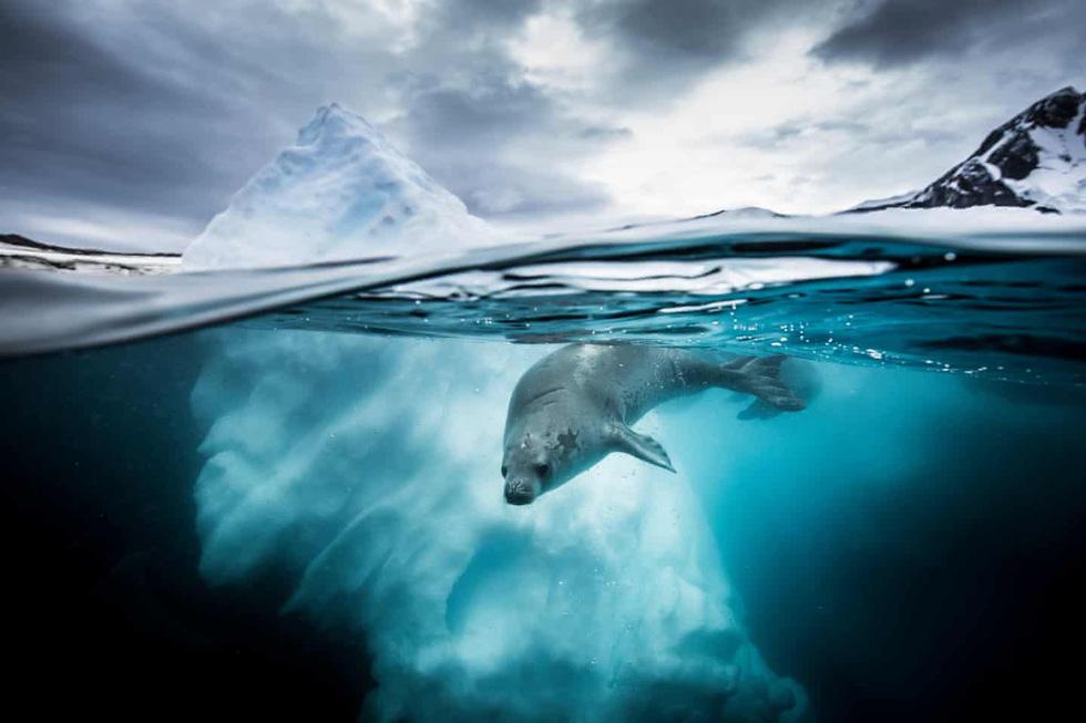 Mê mẩn ảnh đẹp đại dương năm 2019 - Ảnh 9.