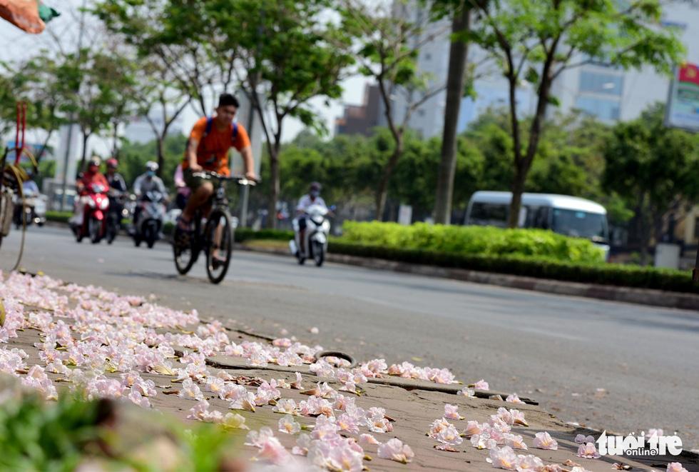 Hoa kèn hồng bung nở sớm, nhuộm tím những góc trời Sài Gòn - Ảnh 3.