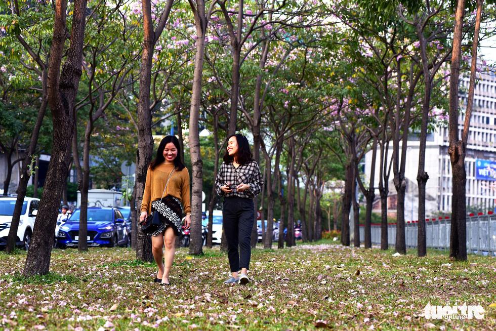 Hoa kèn hồng bung nở sớm, nhuộm tím những góc trời Sài Gòn - Ảnh 8.