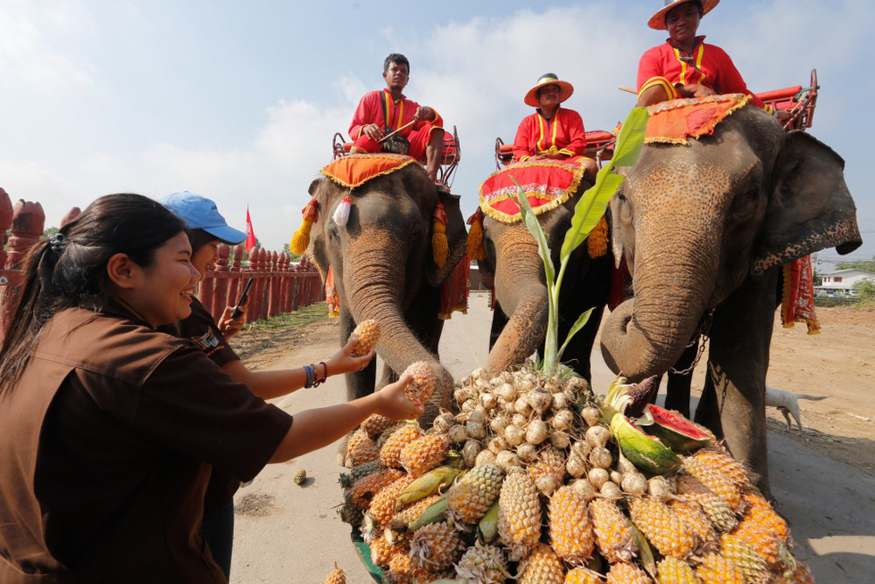 Ngày voi quốc gia Thái Lan: tắm, chơi và ăn rau quả - Ảnh 5.