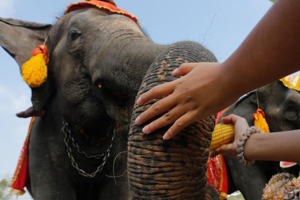 Ngày voi quốc gia Thái Lan: tắm, chơi và ăn rau quả - Ảnh 7.