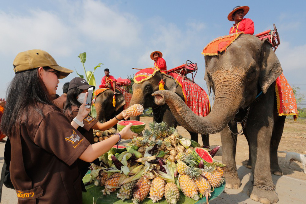 Ngày voi quốc gia Thái Lan: tắm, chơi và ăn rau quả - Ảnh 8.