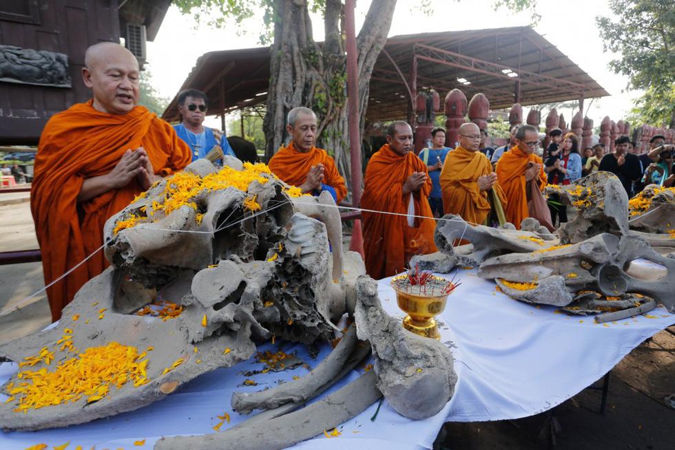 Ngày voi quốc gia Thái Lan: tắm, chơi và ăn rau quả - Ảnh 6.