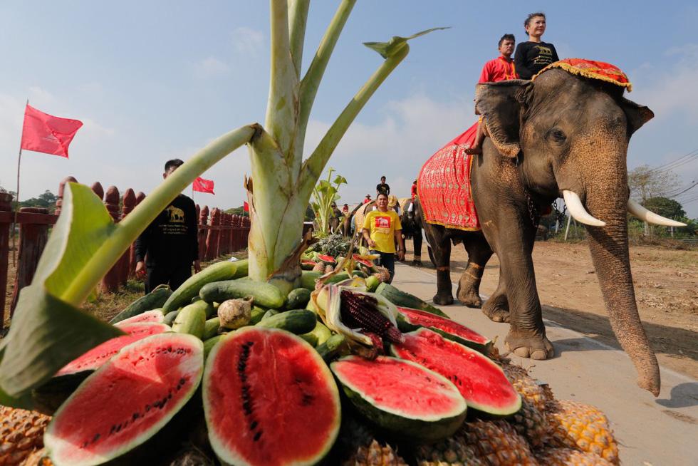 Ngày voi quốc gia Thái Lan: tắm, chơi và ăn rau quả - Ảnh 10.