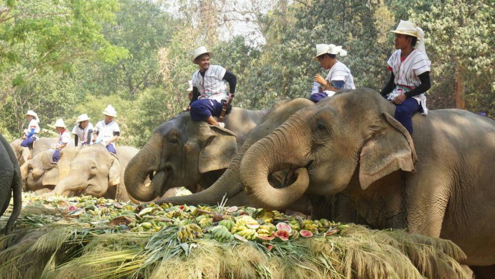 Ngày voi quốc gia Thái Lan: tắm, chơi và ăn rau quả - Ảnh 12.