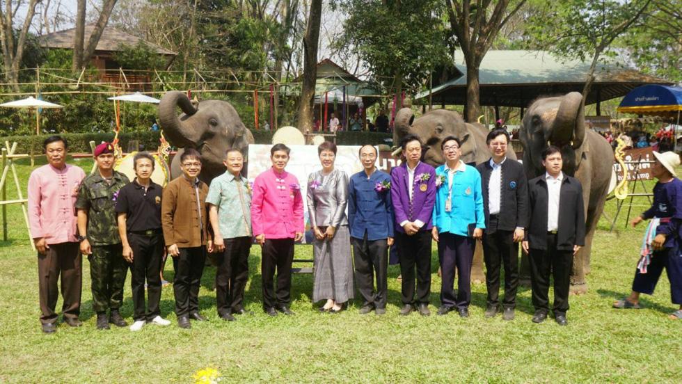 Ngày voi quốc gia Thái Lan: tắm, chơi và ăn rau quả - Ảnh 11.