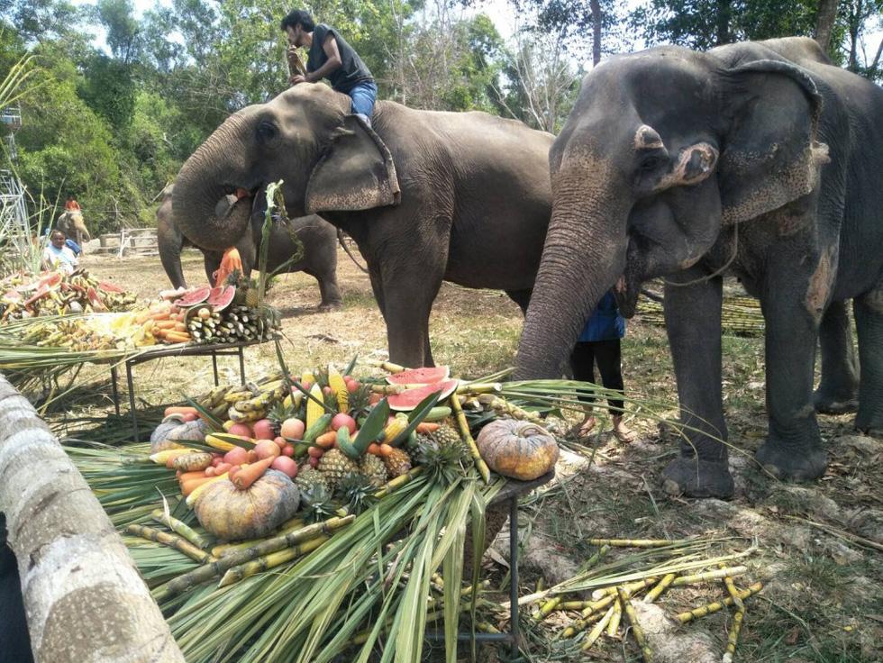 Ngày voi quốc gia Thái Lan: tắm, chơi và ăn rau quả - Ảnh 22.