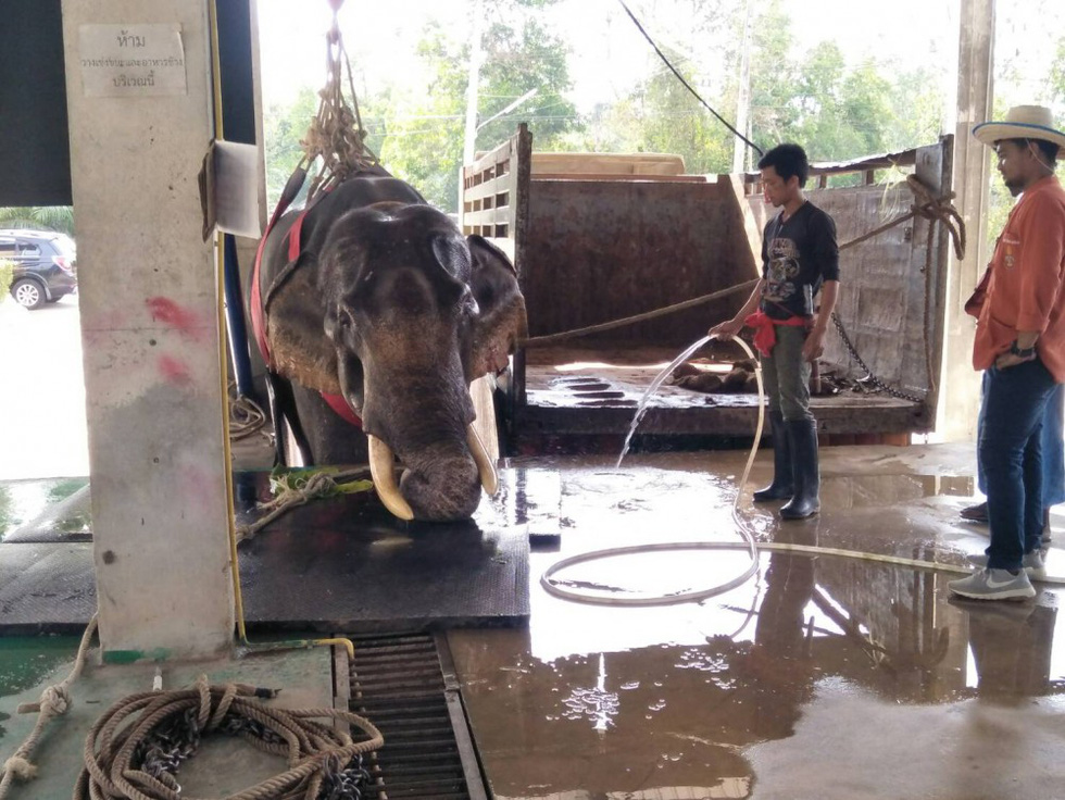 Ngày voi quốc gia Thái Lan: tắm, chơi và ăn rau quả - Ảnh 20.