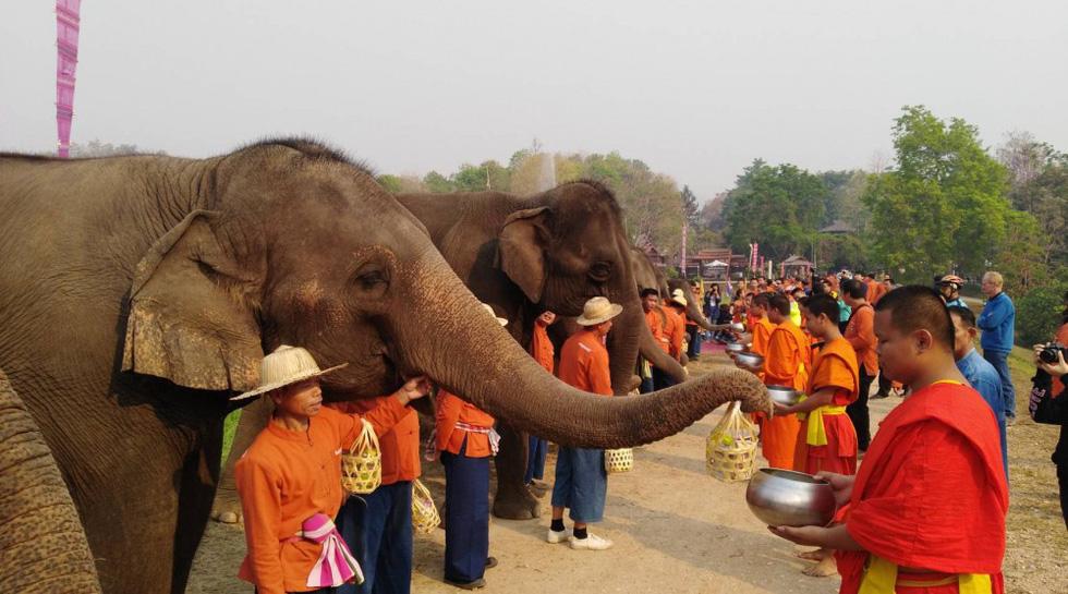 Ngày voi quốc gia Thái Lan: tắm, chơi và ăn rau quả - Ảnh 16.