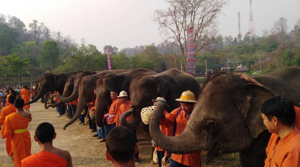 Ngày voi quốc gia Thái Lan: tắm, chơi và ăn rau quả - Ảnh 17.