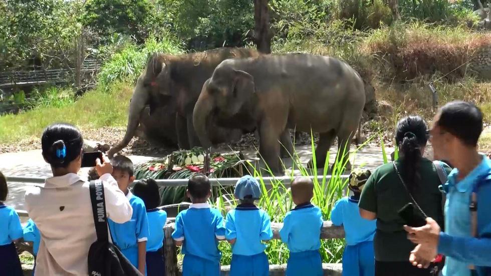 Ngày voi quốc gia Thái Lan: tắm, chơi và ăn rau quả - Ảnh 19.