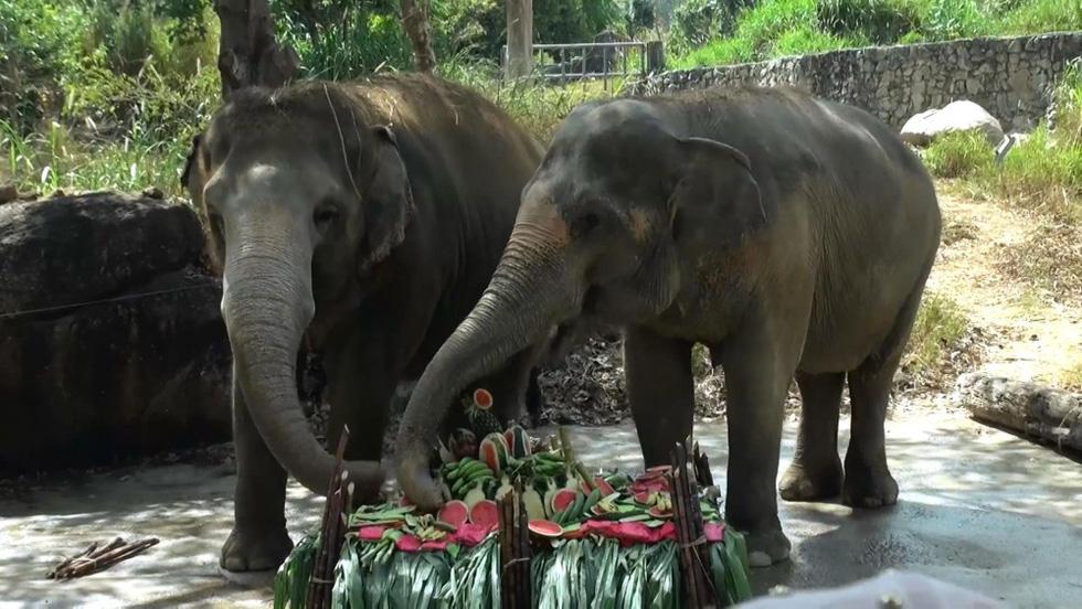 Ngày voi quốc gia Thái Lan: tắm, chơi và ăn rau quả - Ảnh 18.