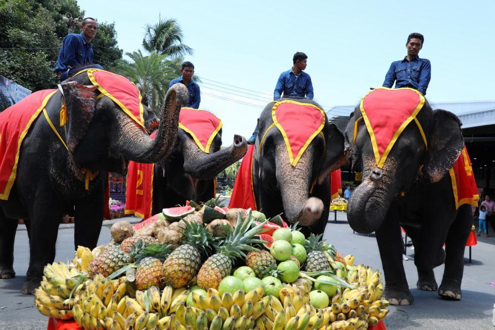 Ngày voi quốc gia Thái Lan: tắm, chơi và ăn rau quả - Ảnh 4.