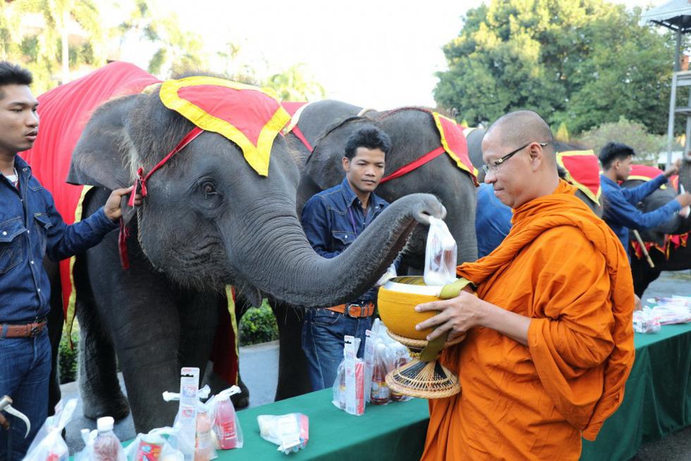 Ngày voi quốc gia Thái Lan: tắm, chơi và ăn rau quả - Ảnh 2.