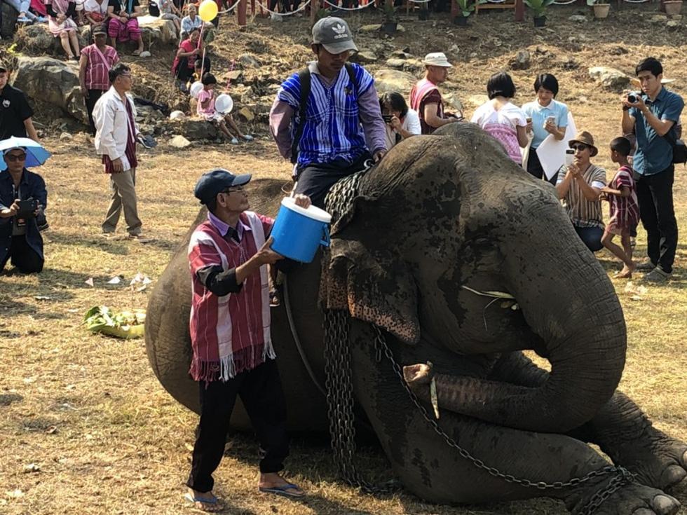 Ngày voi quốc gia Thái Lan: tắm, chơi và ăn rau quả - Ảnh 15.