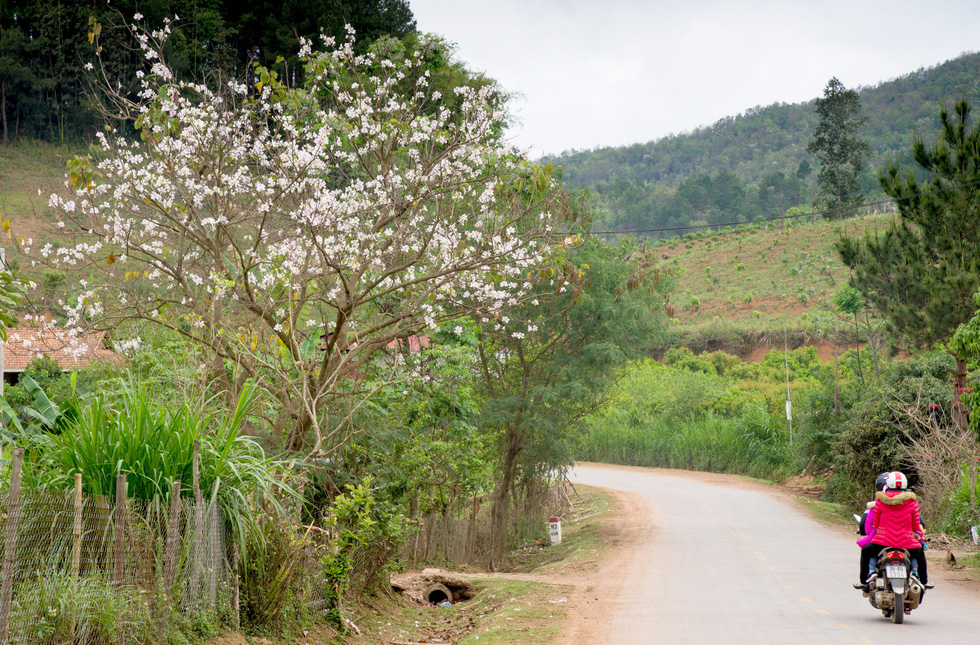 Cung đường 100km ngắm hoa ban rực rỡ miền Tây Bắc - Ảnh 5.
