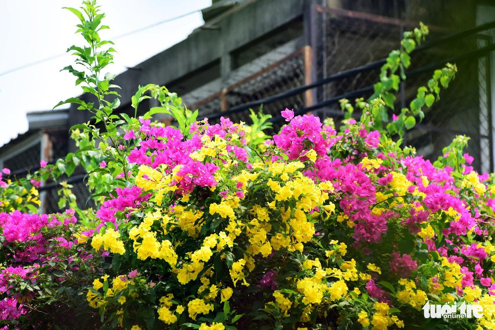 Hoa huỳnh liên rợp bóng đường ray xe lửa chiều Sài Gòn - Ảnh 5.