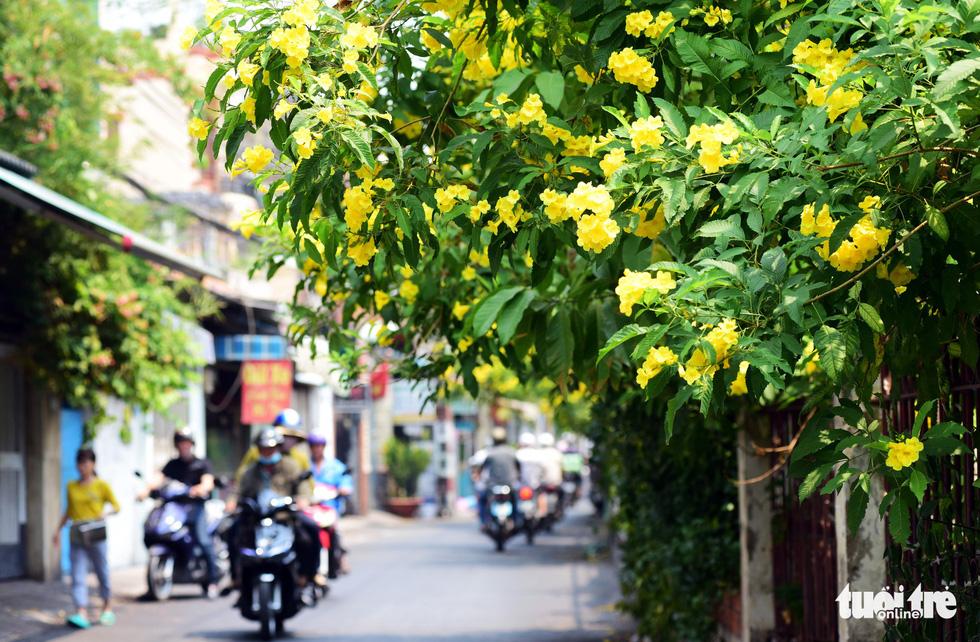 Hoa huỳnh liên rợp bóng đường ray xe lửa chiều Sài Gòn - Ảnh 6.