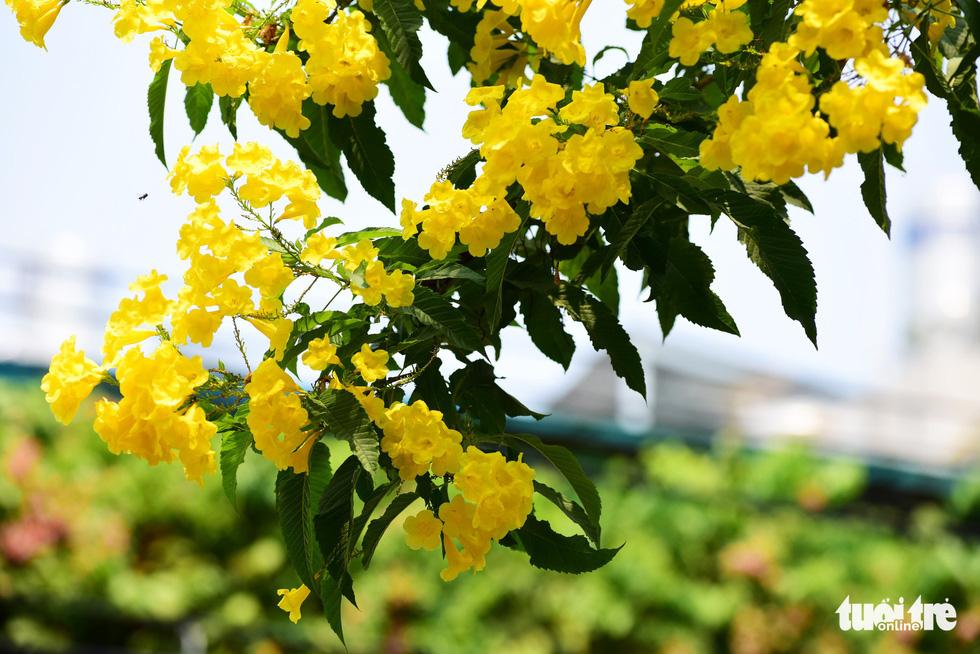 Hoa huỳnh liên rợp bóng đường ray xe lửa chiều Sài Gòn - Ảnh 7.