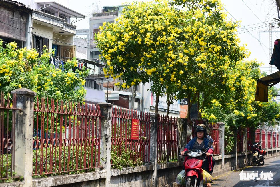 Hoa huỳnh liên rợp bóng đường ray xe lửa chiều Sài Gòn - Ảnh 8.
