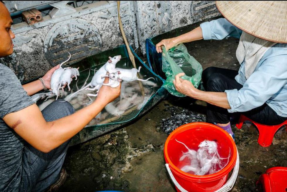 Đặc sản thịt chuột của Việt Nam lên tạp chí National Geographic - Ảnh 6.