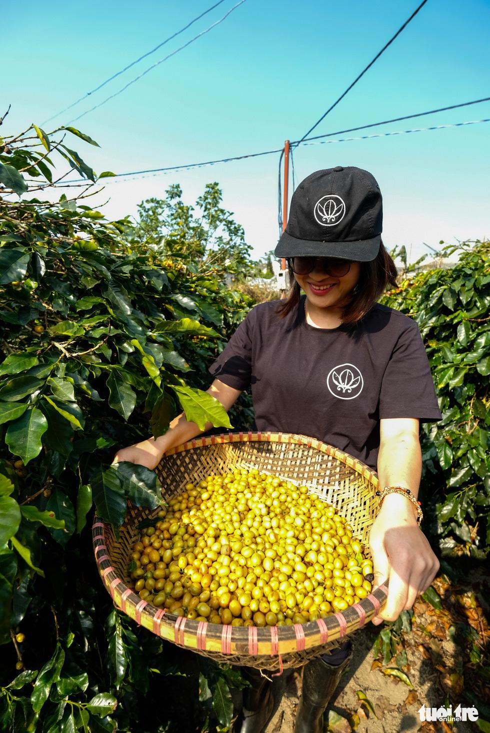Đẹp mê ly mùa hái hạt vàng ở Đà Lạt - Ảnh 5.