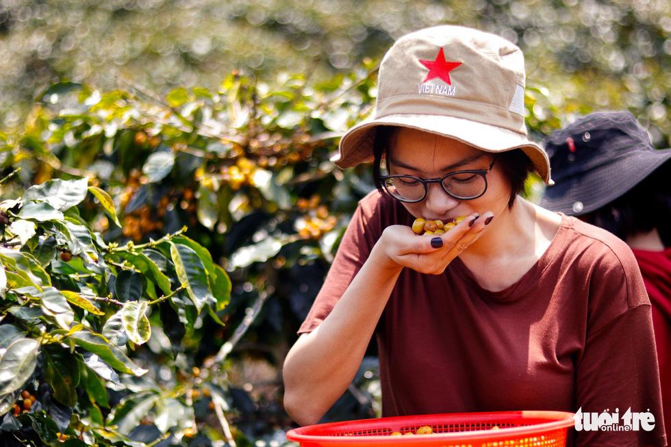 Đẹp mê ly mùa hái hạt vàng ở Đà Lạt - Ảnh 7.