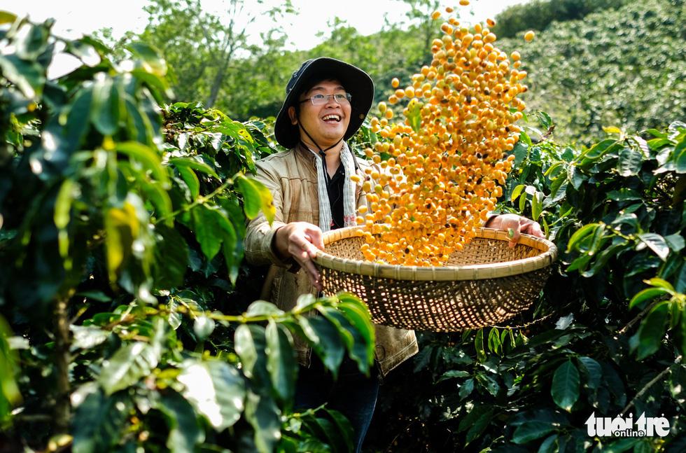 Đẹp mê ly mùa hái hạt vàng ở Đà Lạt - Ảnh 8.