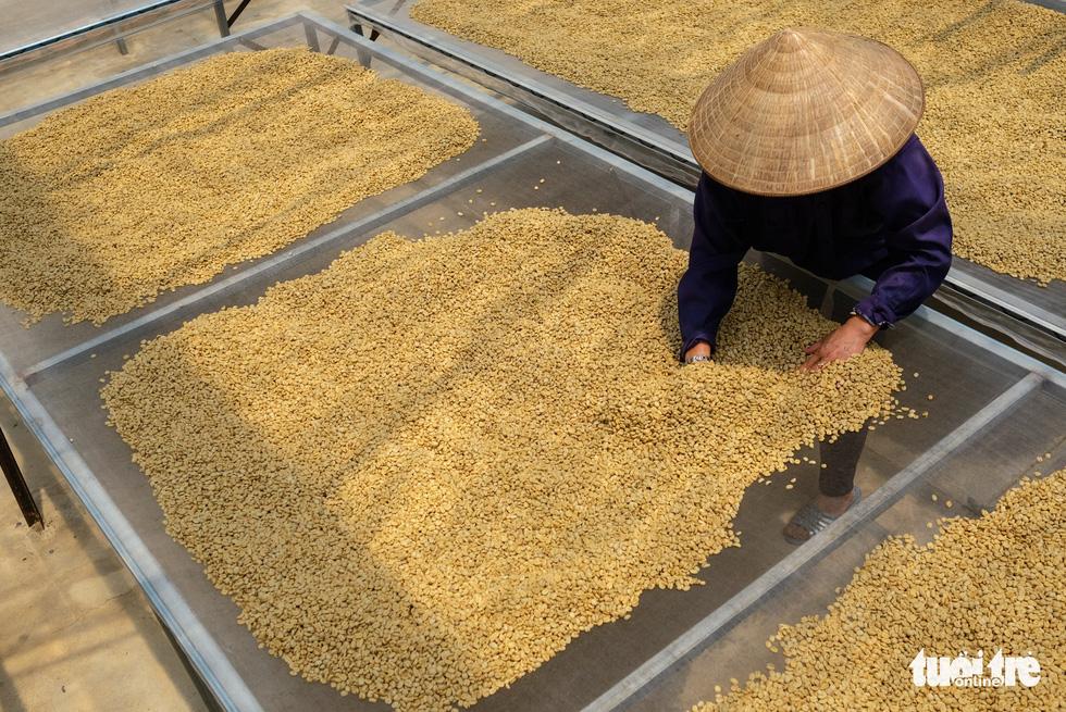 Đẹp mê ly mùa hái hạt vàng ở Đà Lạt - Ảnh 9.