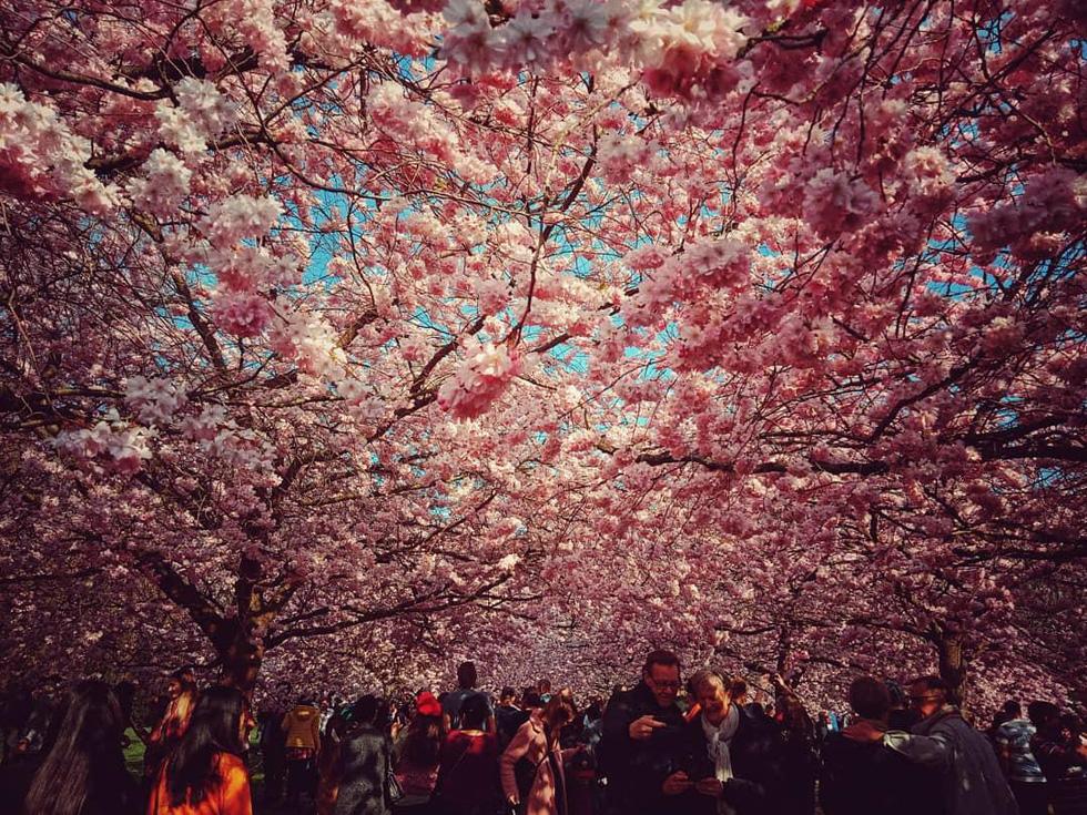Hẹn hò, picnic, phơi nắng và cả... hôn nhau ở nghĩa trang - Ảnh 2.