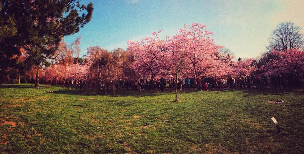 Hẹn hò, picnic, phơi nắng và cả... hôn nhau ở nghĩa trang - Ảnh 7.