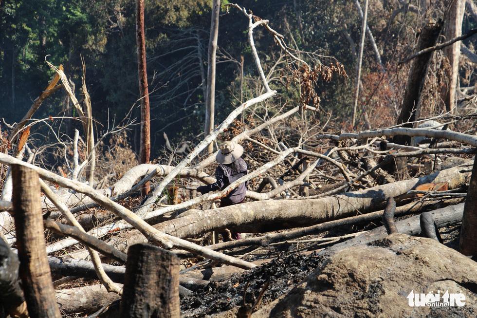 Tàn sát rừng phòng hộ đầu nguồn Ko Róa - Ảnh 3.