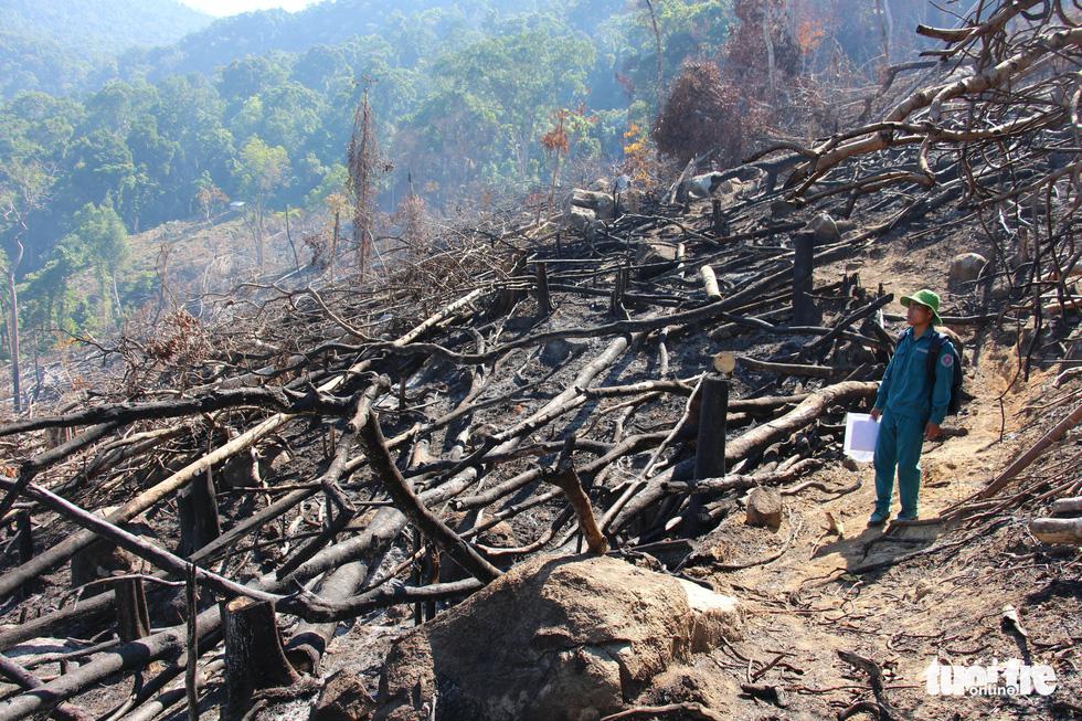 Tàn sát rừng phòng hộ đầu nguồn Ko Róa - Ảnh 2.