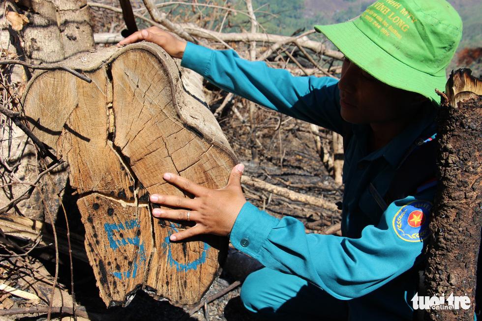 Tàn sát rừng phòng hộ đầu nguồn Ko Róa - Ảnh 15.