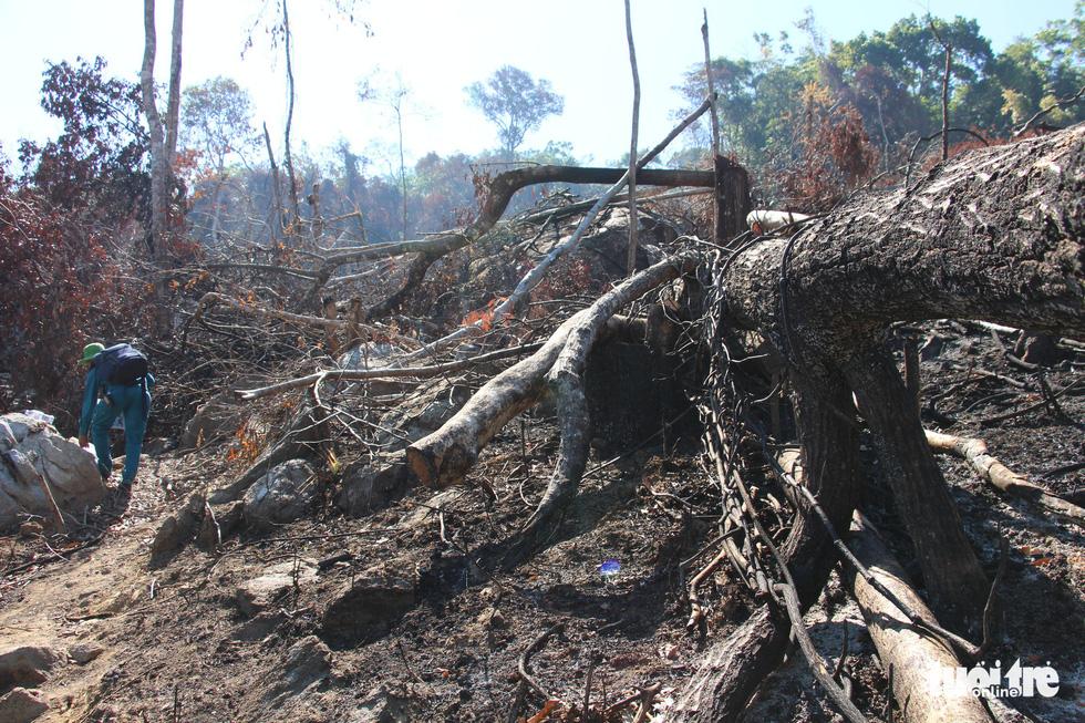 Tàn sát rừng phòng hộ đầu nguồn Ko Róa - Ảnh 7.
