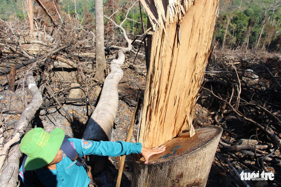 Tàn sát rừng phòng hộ đầu nguồn Ko Róa - Ảnh 8.