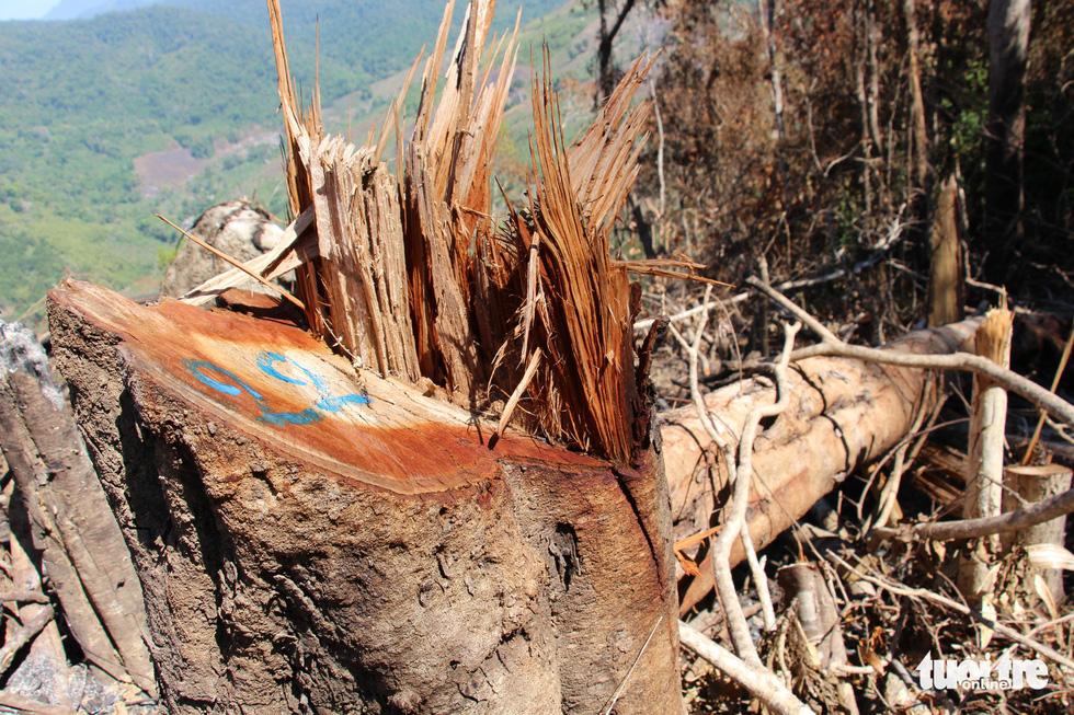 Tàn sát rừng phòng hộ đầu nguồn Ko Róa - Ảnh 9.
