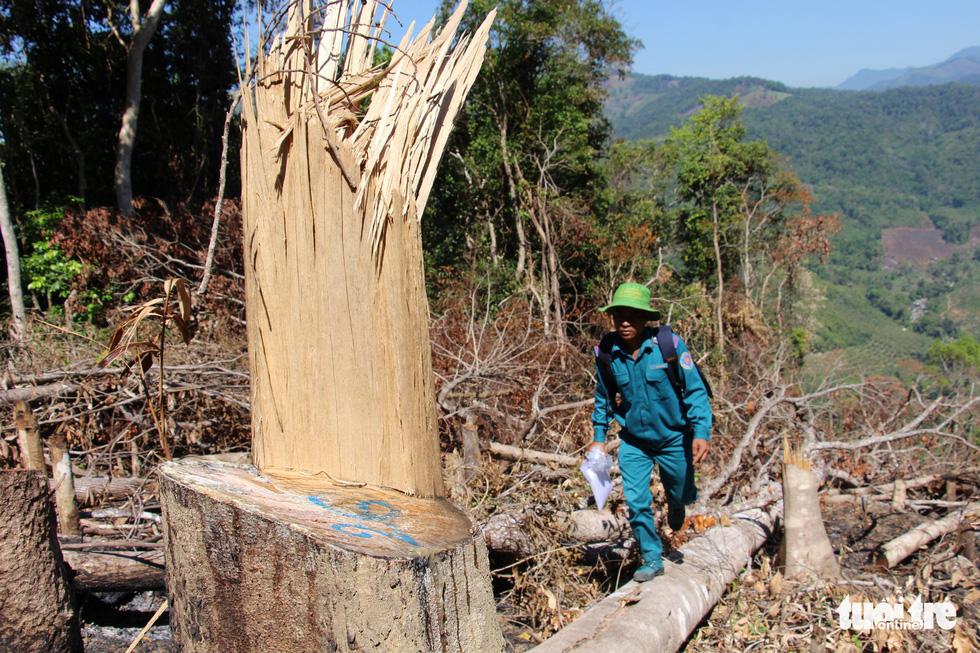 Tàn sát rừng phòng hộ đầu nguồn Ko Róa - Ảnh 11.