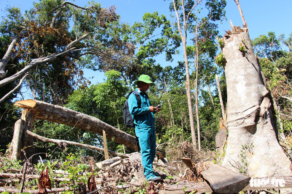 Tàn sát rừng phòng hộ đầu nguồn Ko Róa - Ảnh 12.